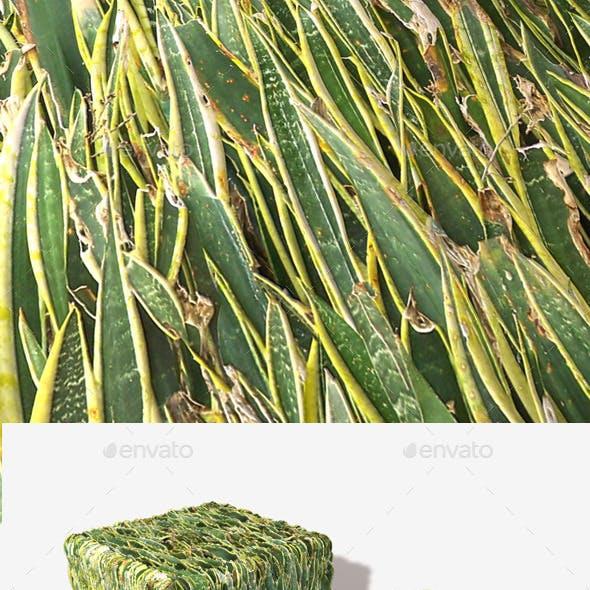 Desert Plants Seamless Texture