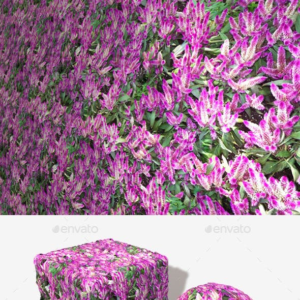 Tropical Pink Flowers Seamless Texture