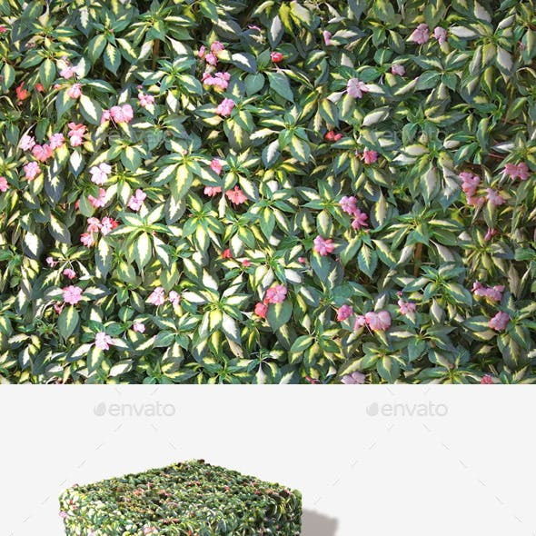 Shrub Flowers Seamless Texture