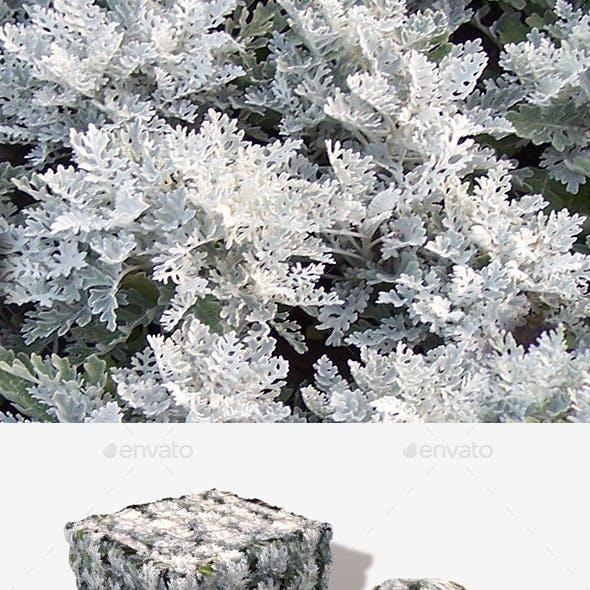 White Fern Plant Seamless Texture