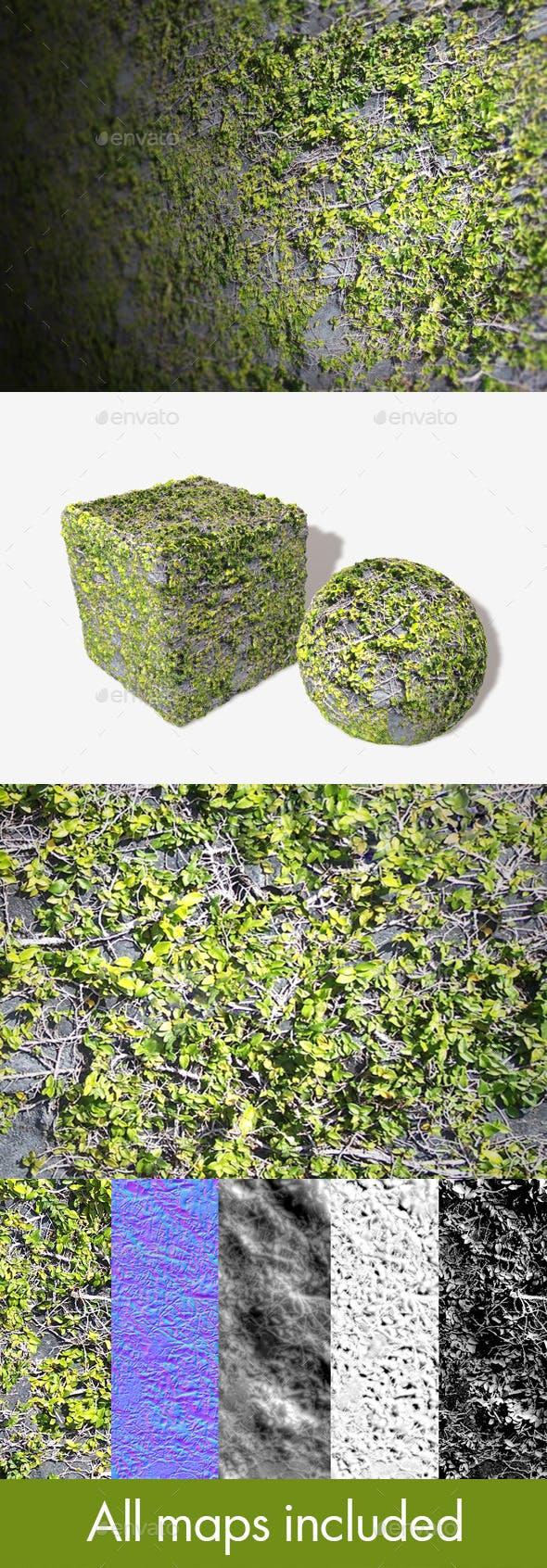 Rock Vines Seamless Texture - 3DOcean Item for Sale