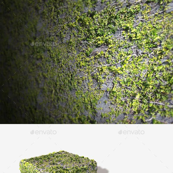 Rock Vines Seamless Texture