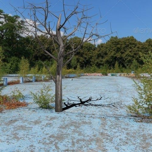 dead tree - 3DOcean Item for Sale