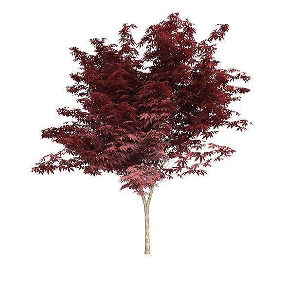 Red Japanese maple v1 - 3DOcean Item for Sale