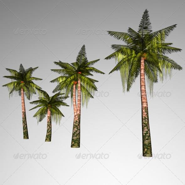 Lowpoly Palmtree - 3DOcean Item for Sale