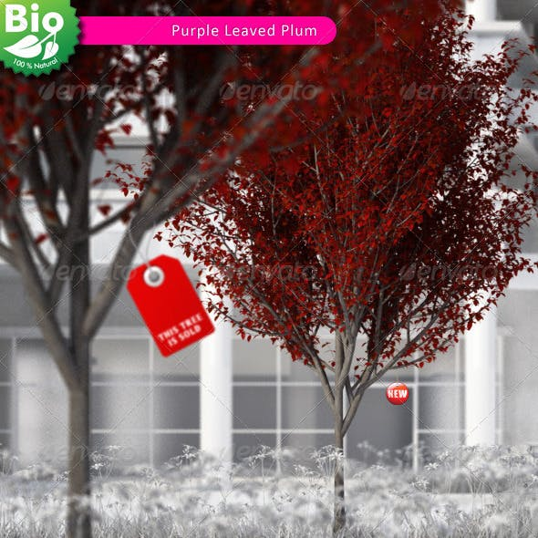 3D Tree - Purple Leaved Plum - 3DOcean Item for Sale