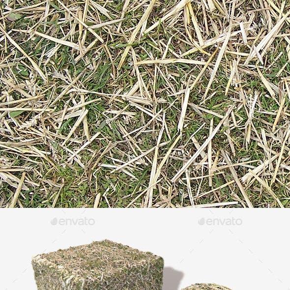 Straw on Grass Seamless Texture