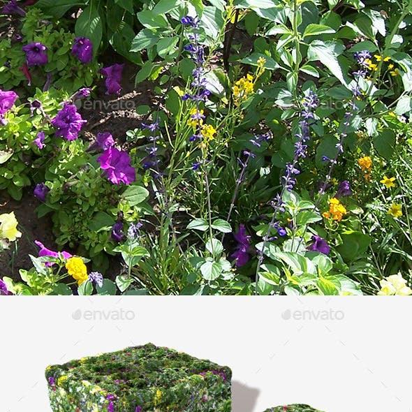 Wild Flowers Seamless Texture