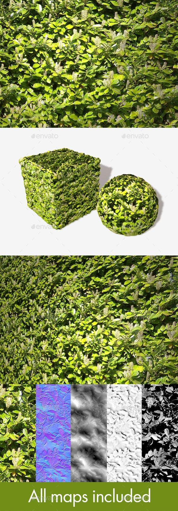 White Flowering Bush Seamless Texture - 3DOcean Item for Sale