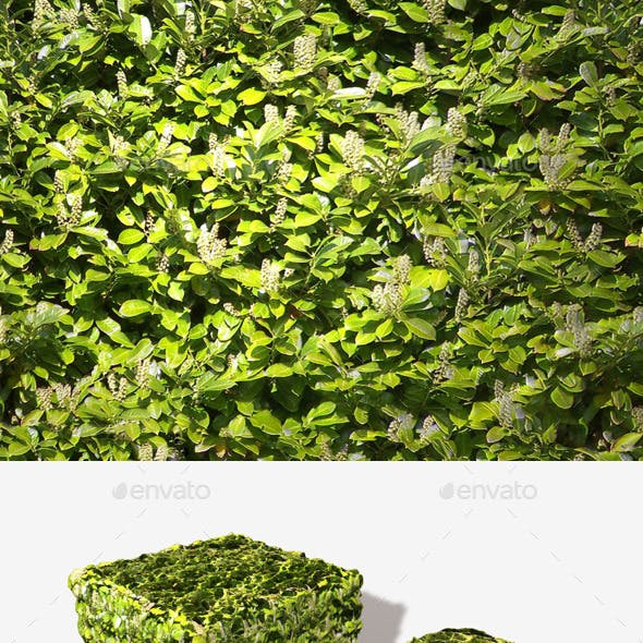 White Flowering Bush Seamless Texture