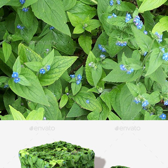 Blue Flowered Weeds Seamless Texture