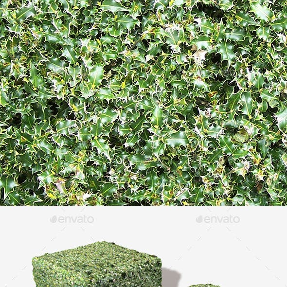 Holly Seamless Texture