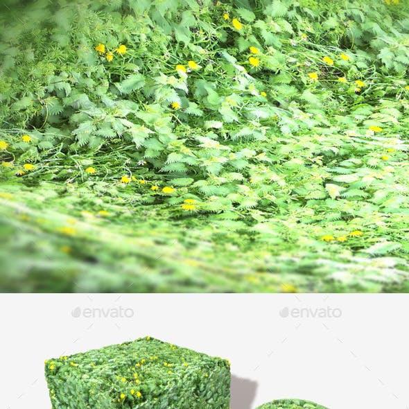 Weeds 2 Seamless Texture