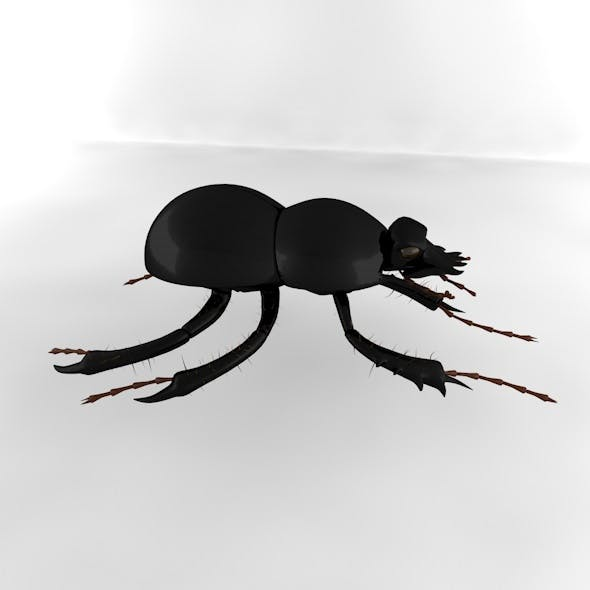 dung beetle - 3DOcean Item for Sale
