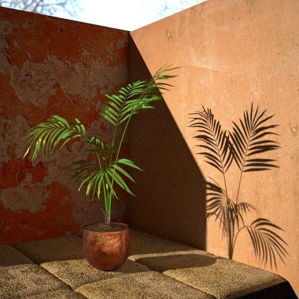 Palm Tree House Plant - 3DOcean Item for Sale