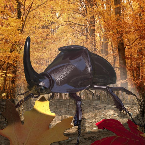 Rhinoceros Beetle RIGGED