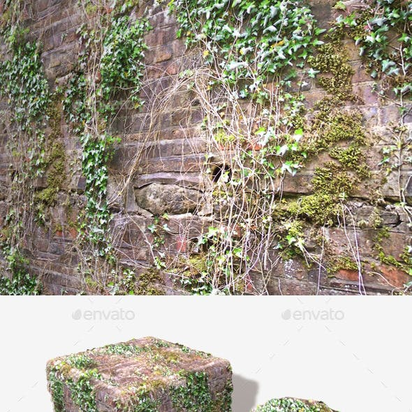 Ivy Vines Wall Seamless Texture