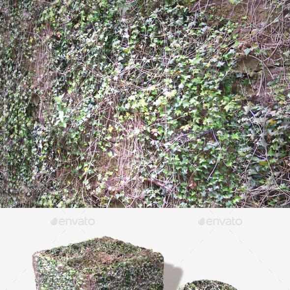 Overgrown Ivy Vines Seamless Texture