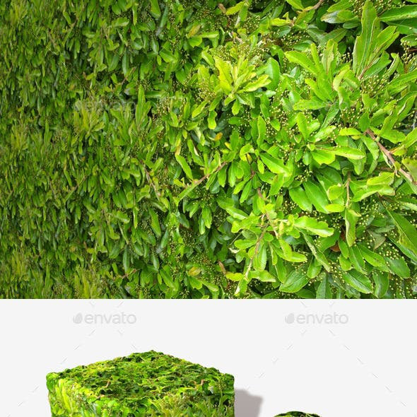 Bright Green Bush Seamless Texture