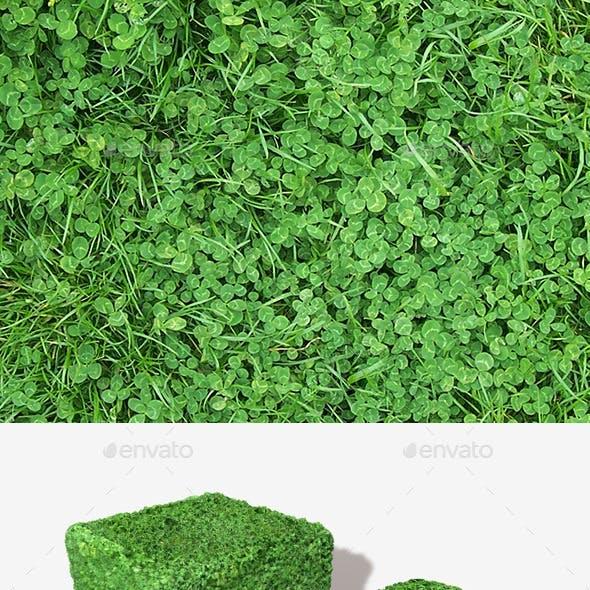 Clover Field Seamless Texture