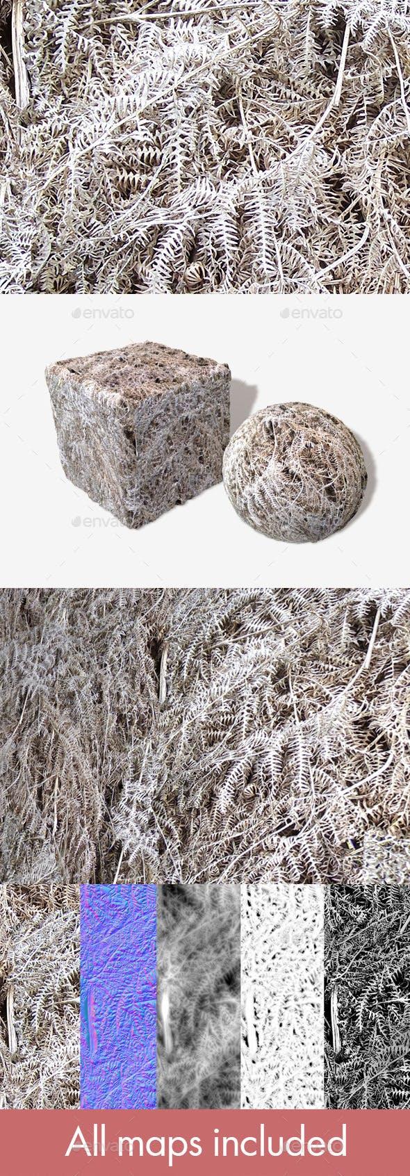 Dead Fern Seamless Texture - 3DOcean Item for Sale