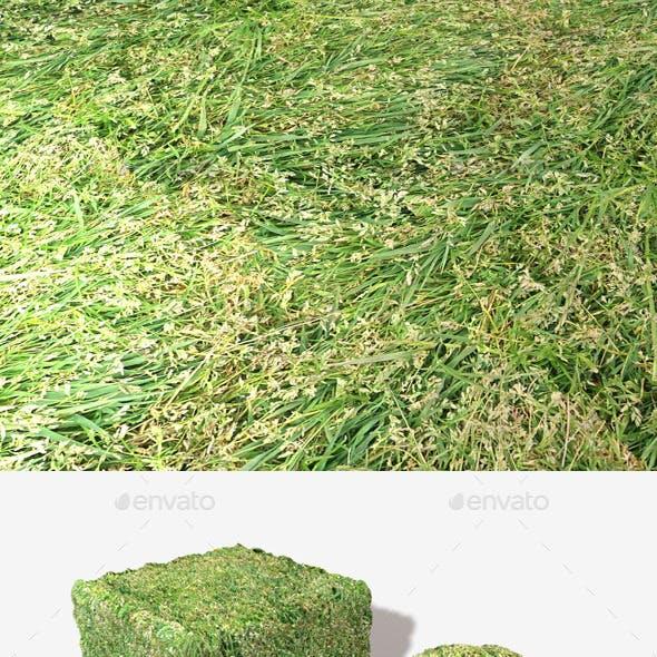 Long Trampled Grass Seamless Texture