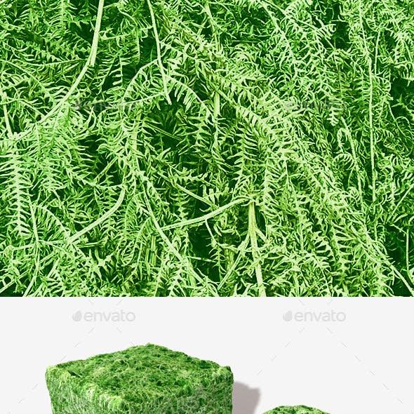 Fern Seamless Texture