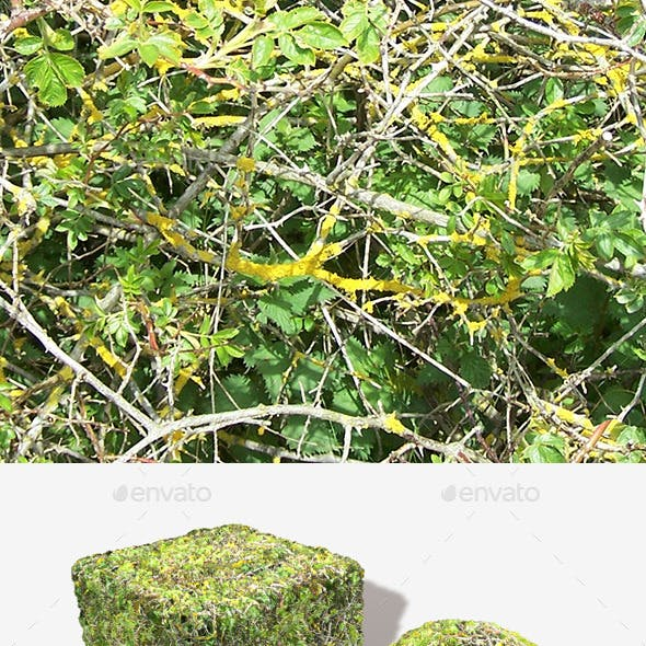 Bush Branches Seamless Texture