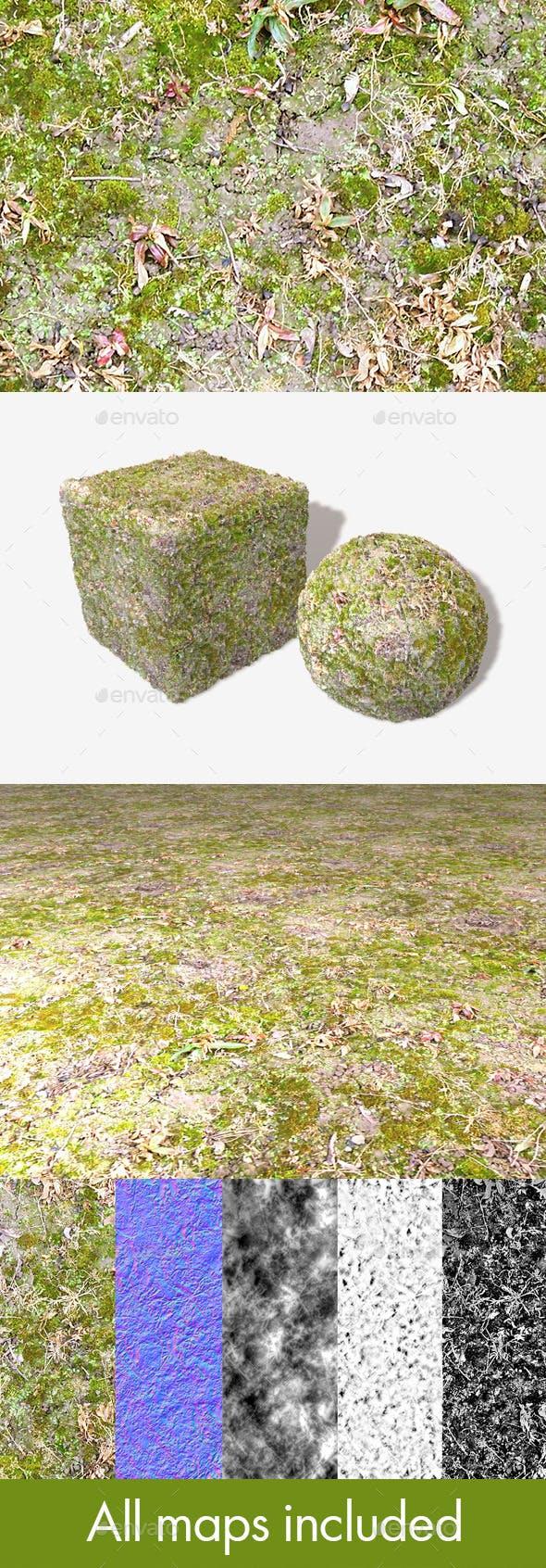 Wet Moss Seamless Texture - 3DOcean Item for Sale