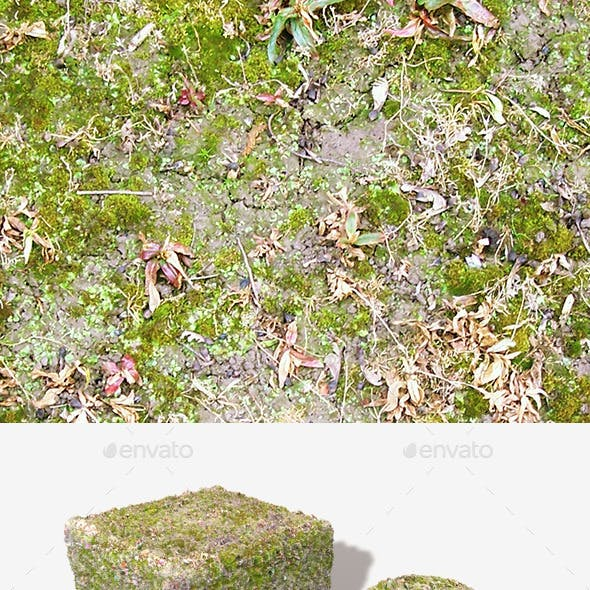 Wet Moss Seamless Texture