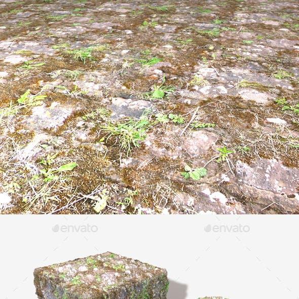 Mossy Ground Bricks Seamless Texture