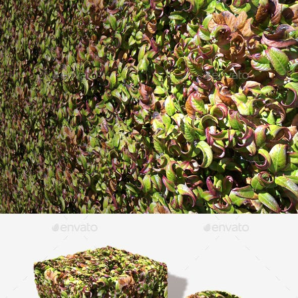 Curly Leaves Seamless Texture
