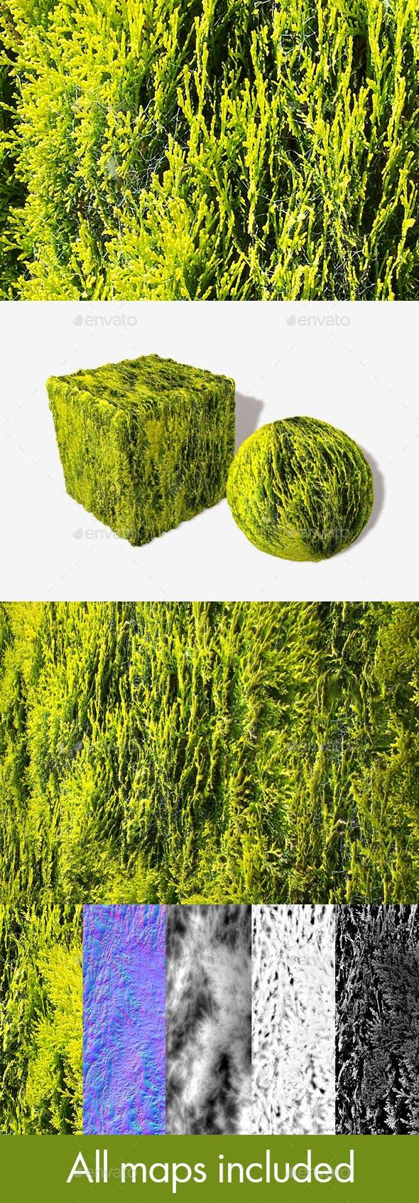 Fir Cobwebs Seamless Texture - 3DOcean Item for Sale