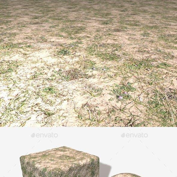 Sand Grass Weeds Seamless Texture