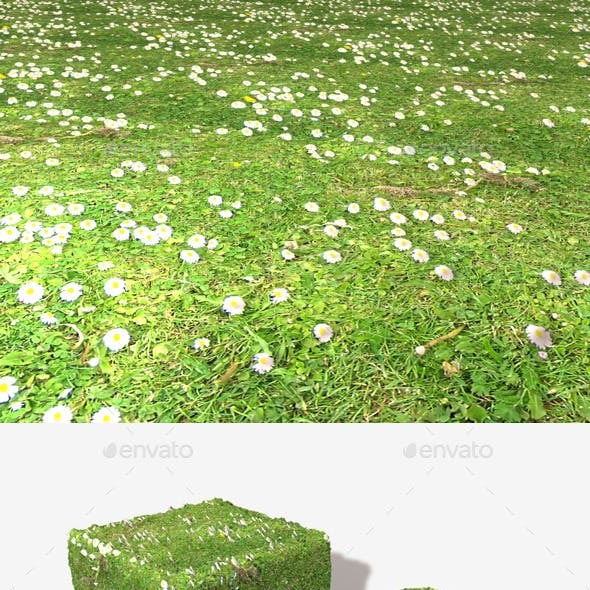 Daisy Lawn Seamless Texture
