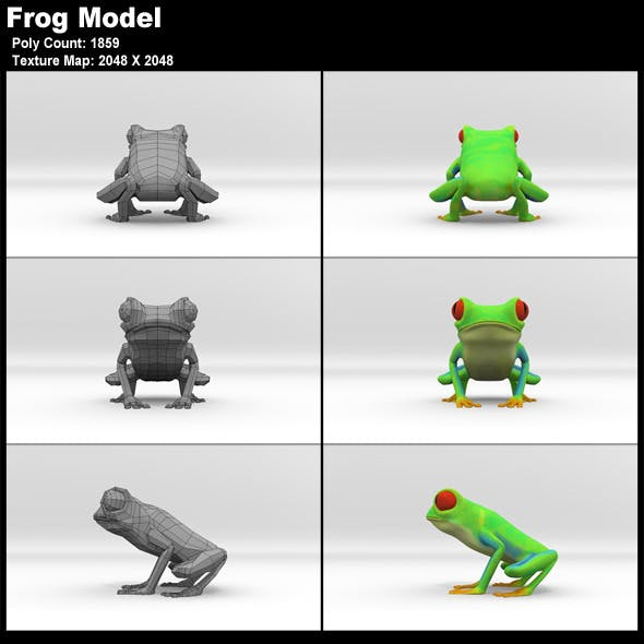 Red Eyed Tree Frog Model