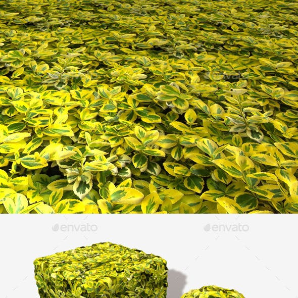 Yellow Leaves Seamless Texture