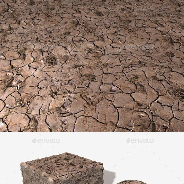 Dog Prints in Mud Seamless Texture