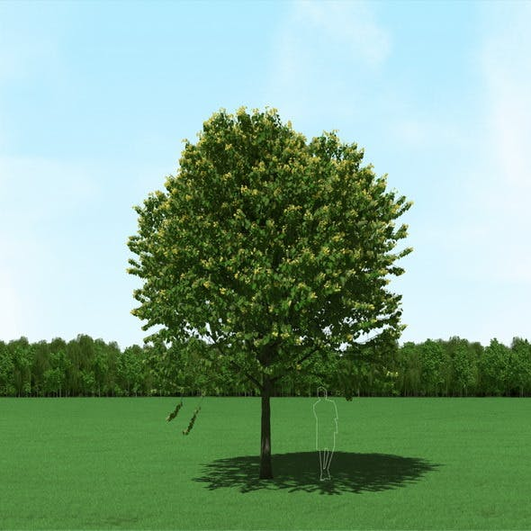 Blooming Tilia (Linden) Tree 3d Model