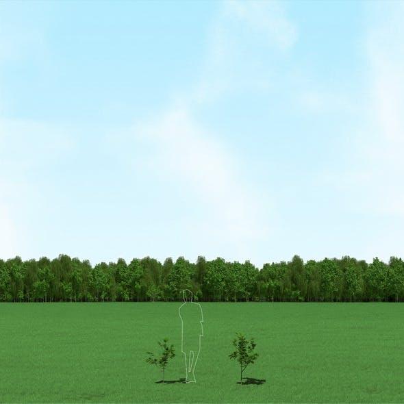 Blooming Tilia (Linden) Trees 3d Models