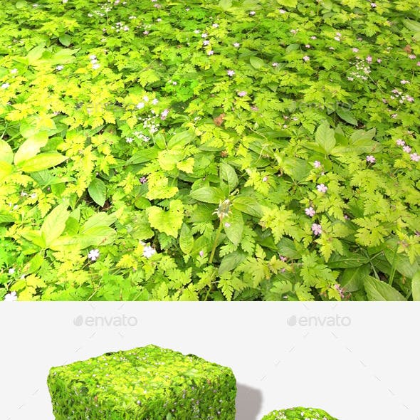 Ground Covering Plants Seamless Texture