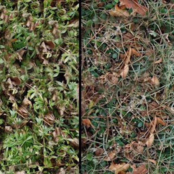 2 Leaf Ground Cover Textures
