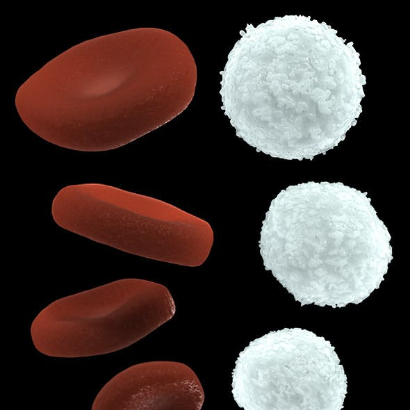 Red and White Blood Cells, High and Low Poly