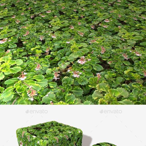 Hardy Ground Plants Seamless Texture