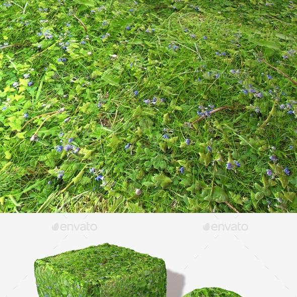 Plants Weeds Grass Seamless Texture