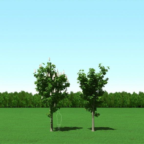 Blooming Chesstnut Trees (Castanea) 3d Models