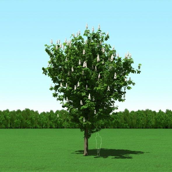 Blooming Chesstnut (Castanea) Free Tree 3d Model