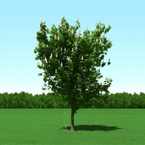 Blooming Chesstnut Tree (Castanea) 3d Model