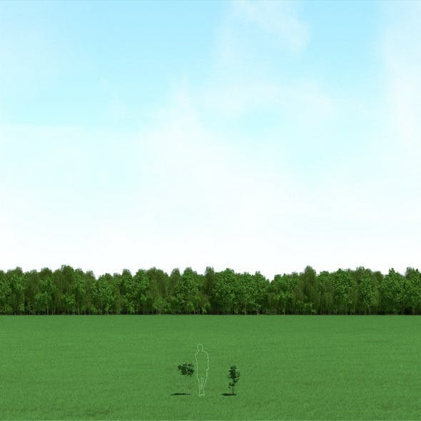 Maple (Acer) Trees 3d Models - 3DOcean Item for Sale