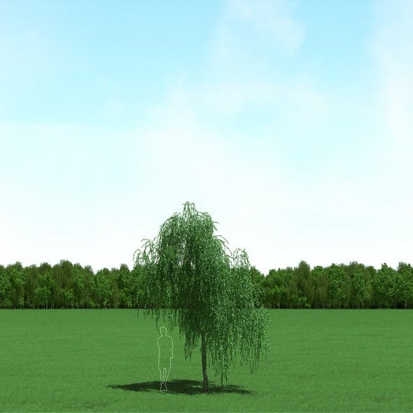 Willow (Salix) Tree 3d Model - 3DOcean Item for Sale
